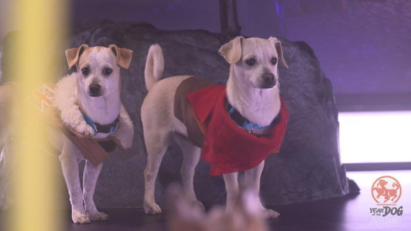 Overwatch встретила Год собаки вместе с настоящими щенками в рамках ивента Puppy Rumble