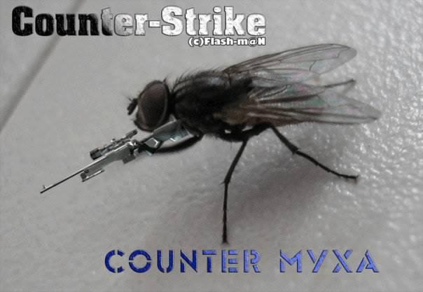 Контер муха - Галерея
