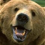 Troyan_Bear