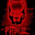 14_Pit_Bull_88