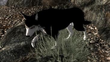 "Fallout 3 ""Новый скин Псины | New Dogmeat skin"""