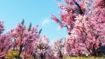 "Skyrim SE ""Деревья сакуры"""