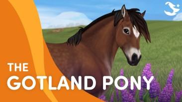 В Star Stable прибыли Готландские пони