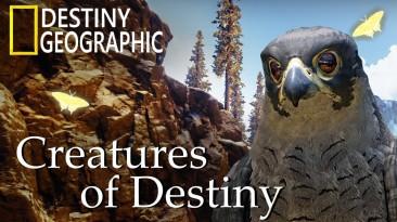 Фанат создал документальный фильм о животных в Destiny 2