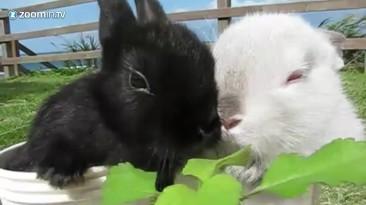 Топ-5 игровых кроликов