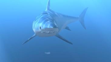 Diver: Deep Water Adventures. Аквалангисты - это не игра!