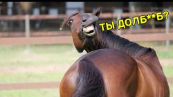 Суровые лошадиные будни...