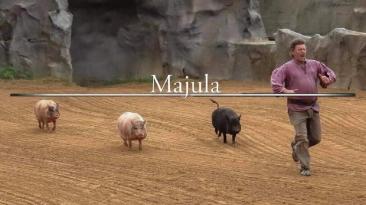 Маджула