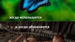 Эффект виндобабочки