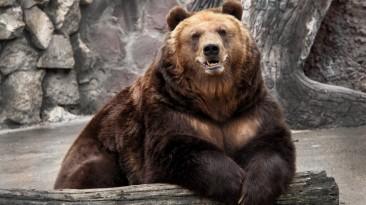 """Elder Scrolls 5: Skyrim """"Новый фон - Медвежий зоопаркот Малави"""""""