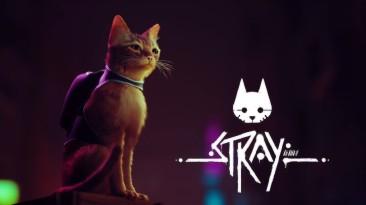 Stray про приключения кота в мире киберпанка выйдет в 2022 году. Представлен геймплейный трейлер