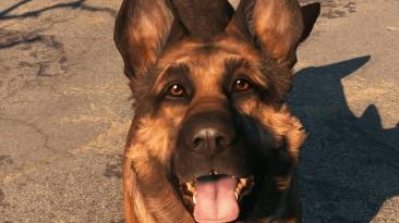 В Fallout 76 добавили собаку из прошлой части