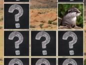 Memory Match Jungle Animals: Животные в джунглях - меморина матч