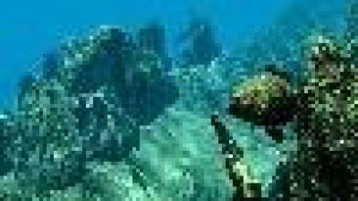 Spearfishing – еще один симулятор подводной охоты