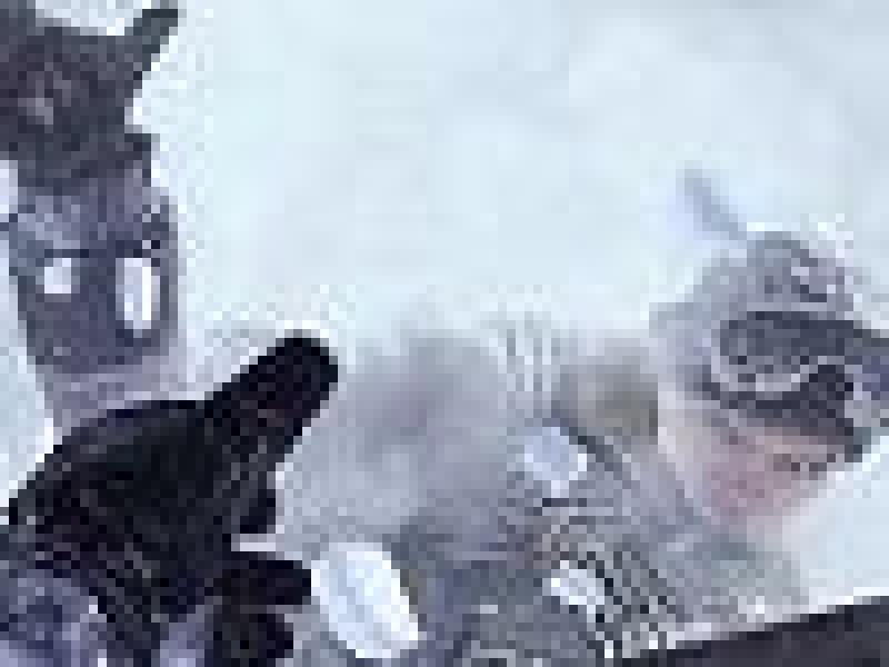 Modern Warfare 3: Infinity Ward еще не знает, каким будет ее следующий проект