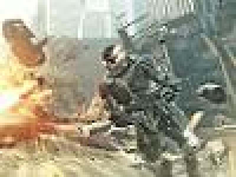 Crysis 2 в картинках