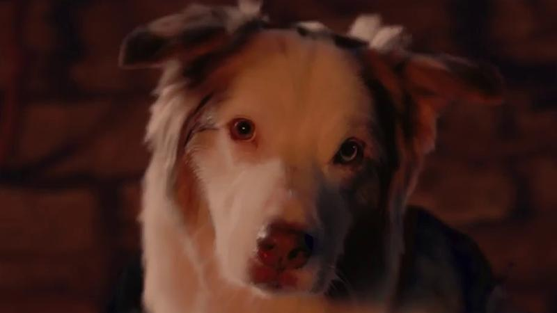 Новый трейлер Shadow of the Tomb Raider посвящен Национальному дню собаки
