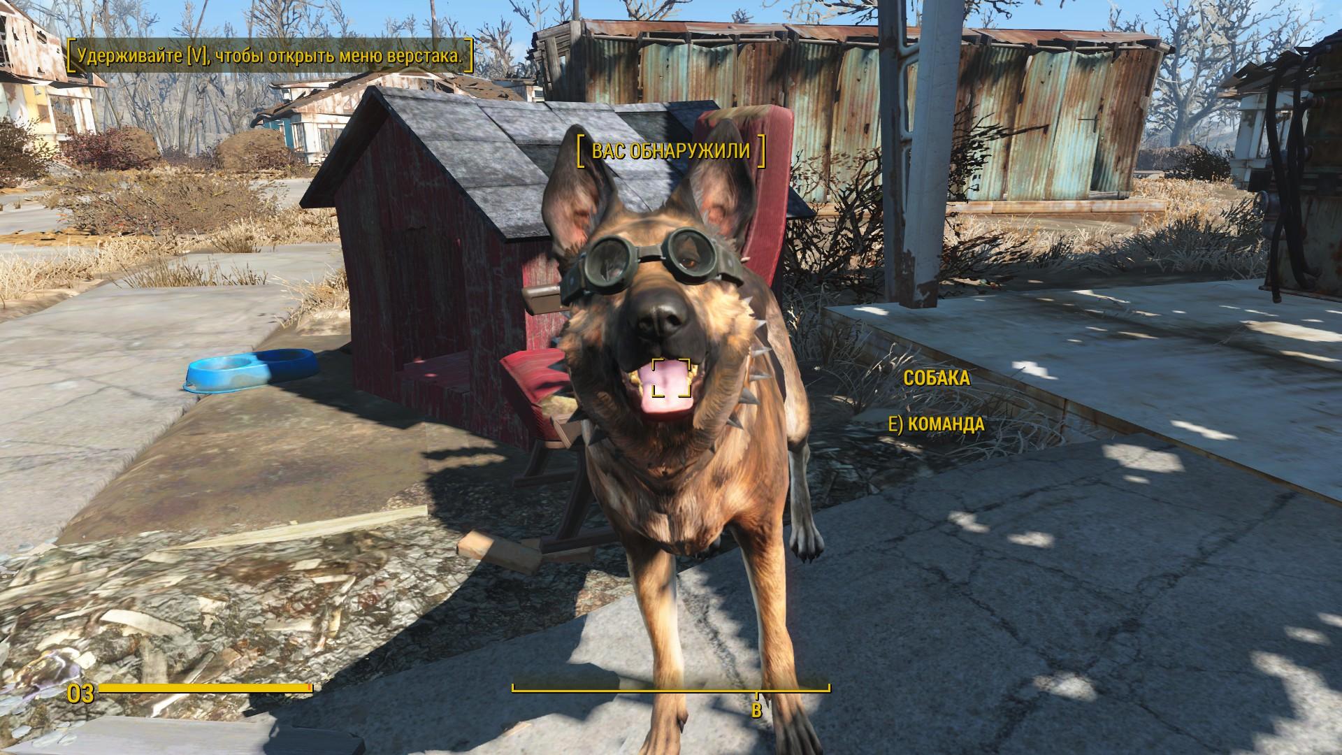 Собака - Fallout 4 Собака, Собака в очках, Собака в ошейнике