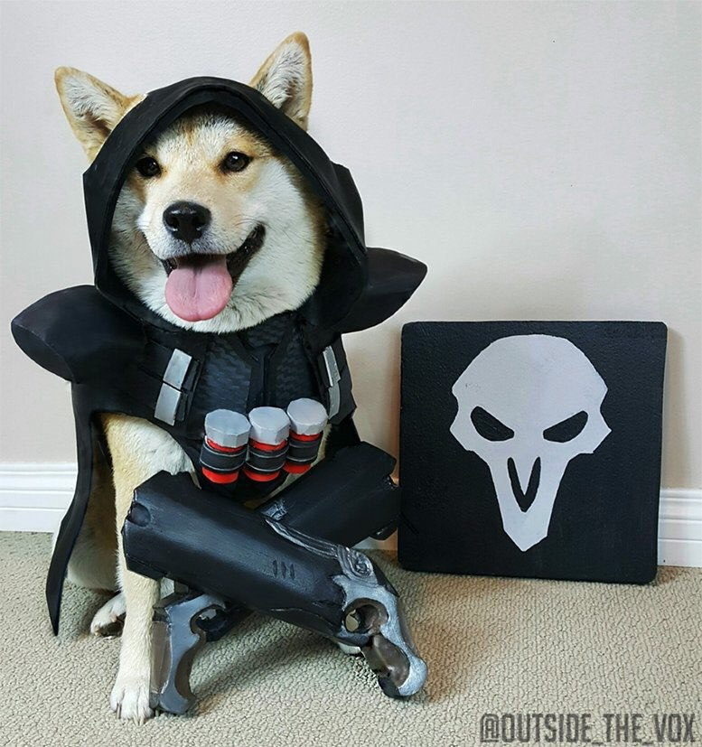 Просто лучший косплеер Овервотча - - Косплей Overwatch, Собака