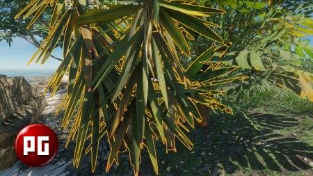 молодые деревья, пальмы