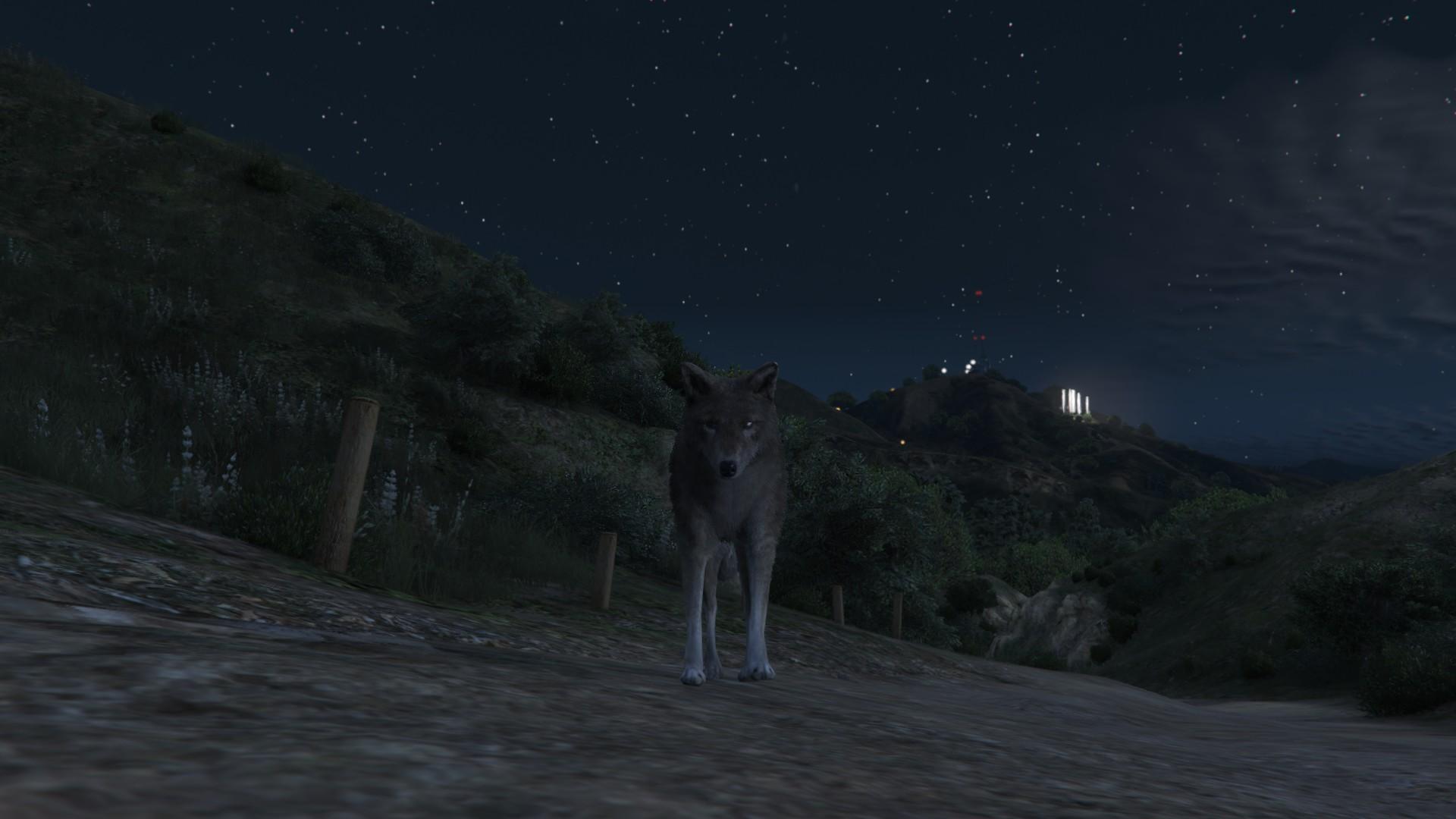 Результат поедания кактусов - Grand Theft Auto 5 кактусы, животные