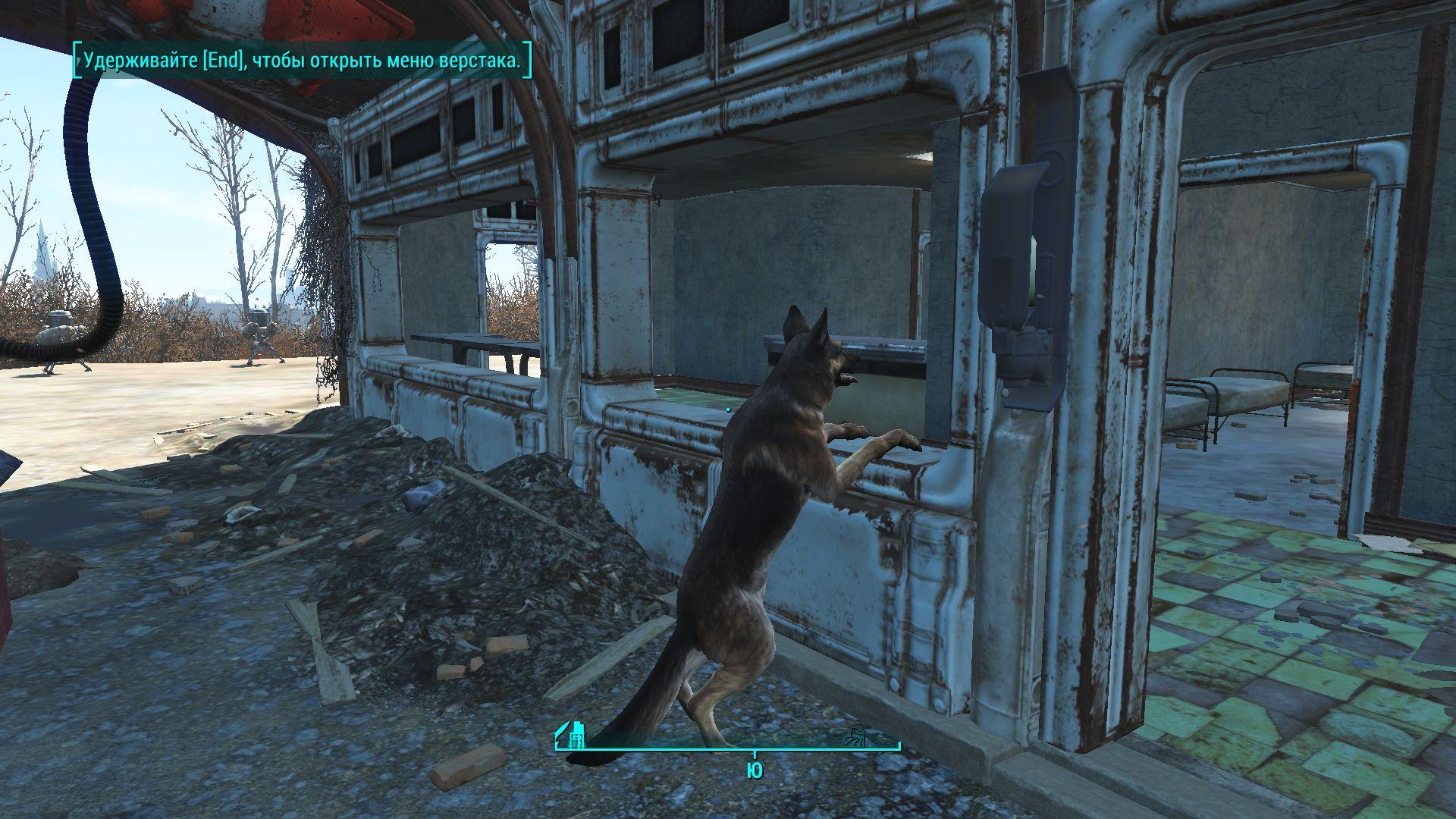 Собака смотрела в окно. - Fallout 4