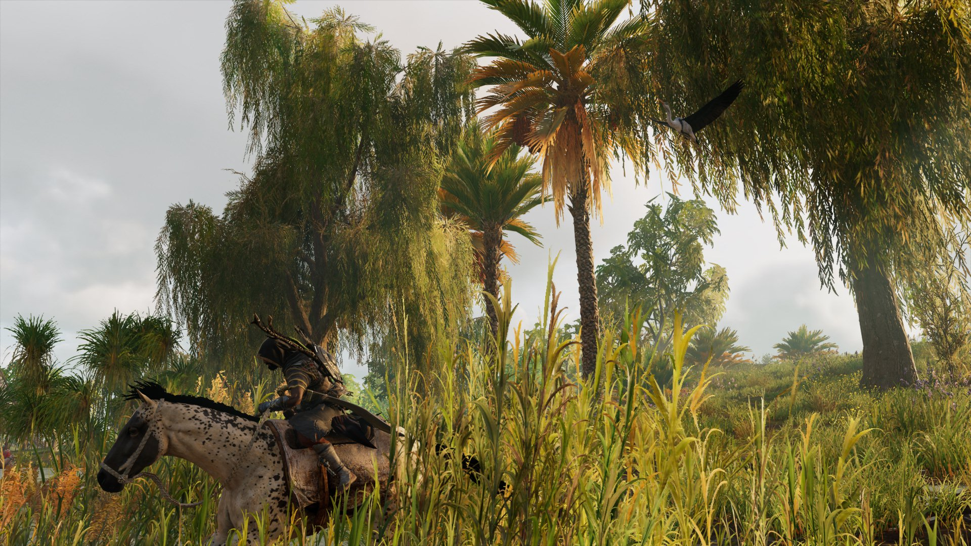 20180211184923.jpg - Assassin's Creed: Origins