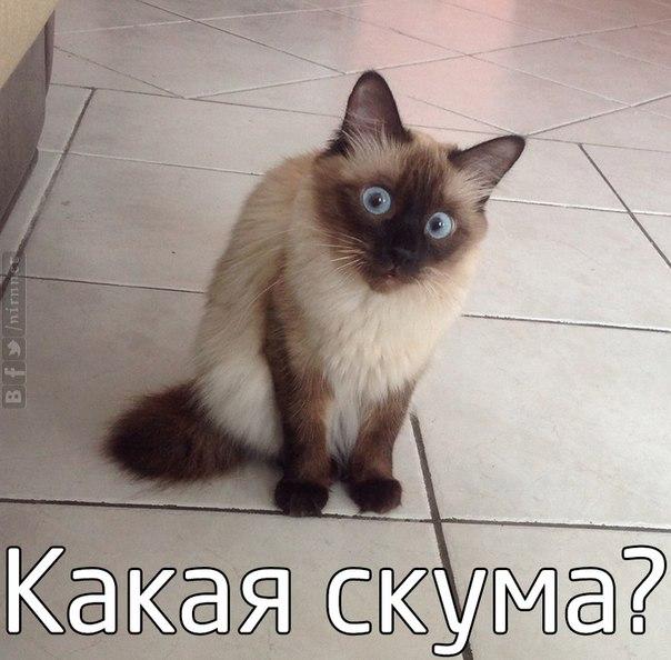 кот - - юмор