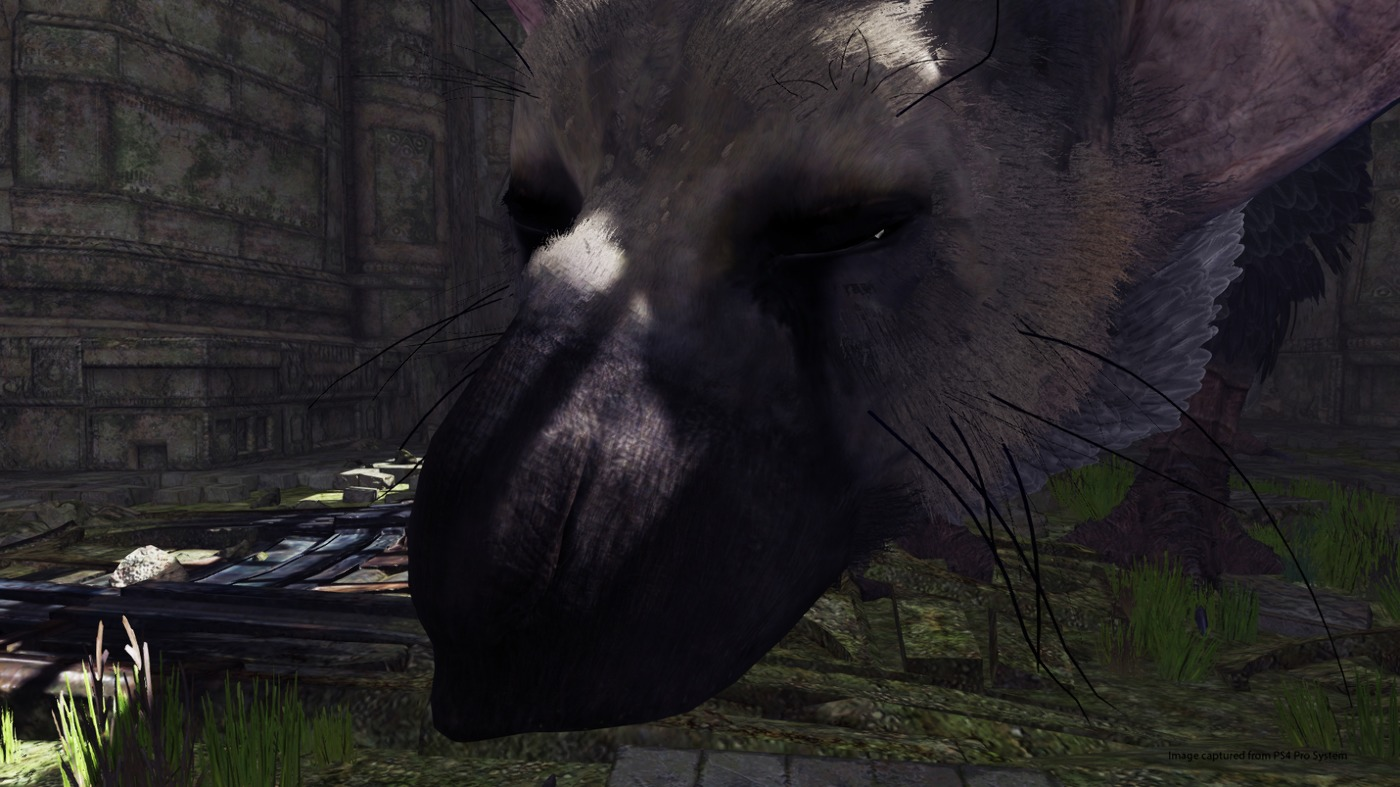 73e8920b89e8f5f055ecb8fd961a5ae5.jpg - Last Guardian, the