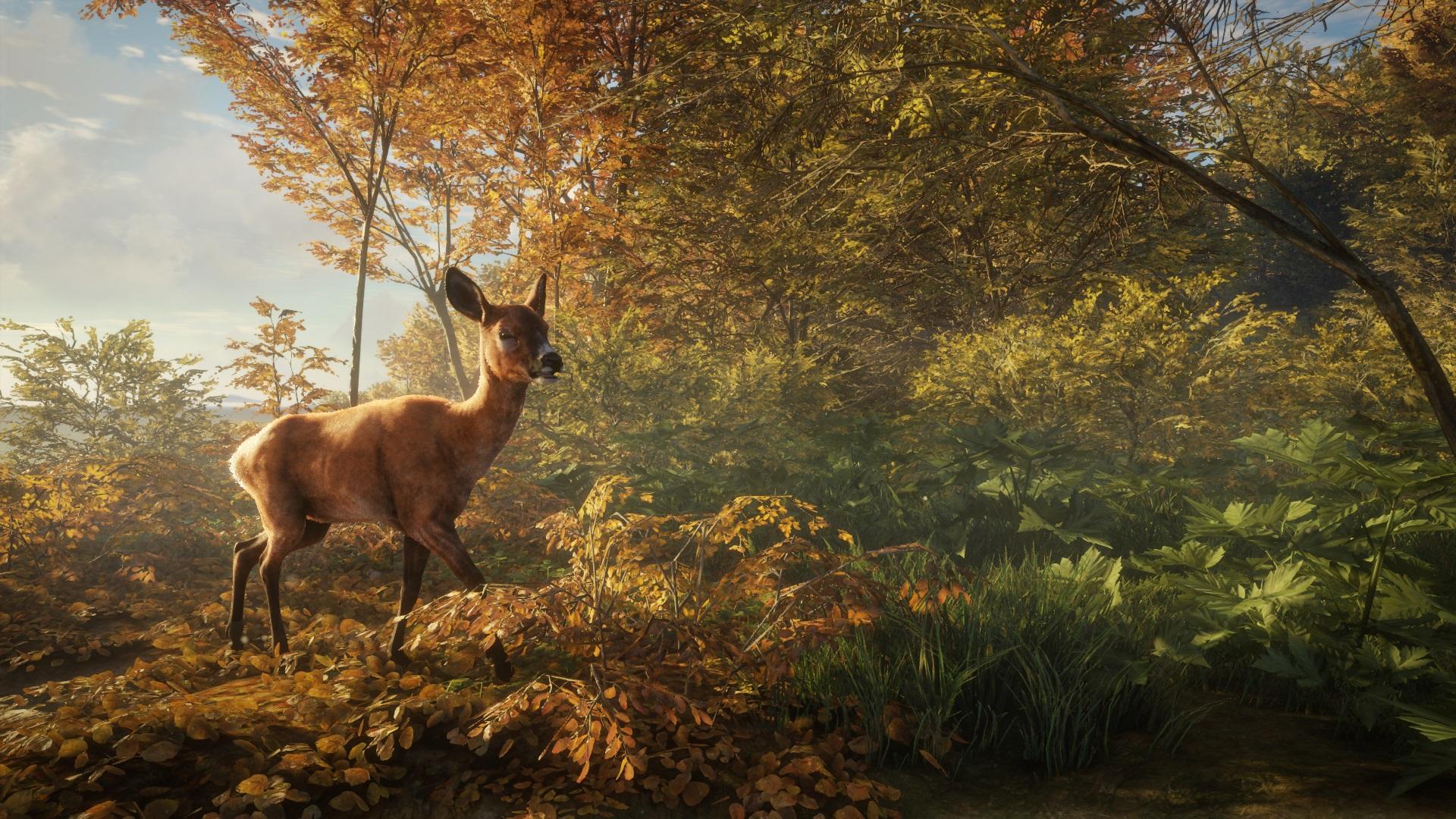 screenshot-roe-deer-female.jpg - Hunter: Call of the Wild, the