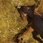 Assassin's Creed: Odyssey Спустя 70 часов игры в