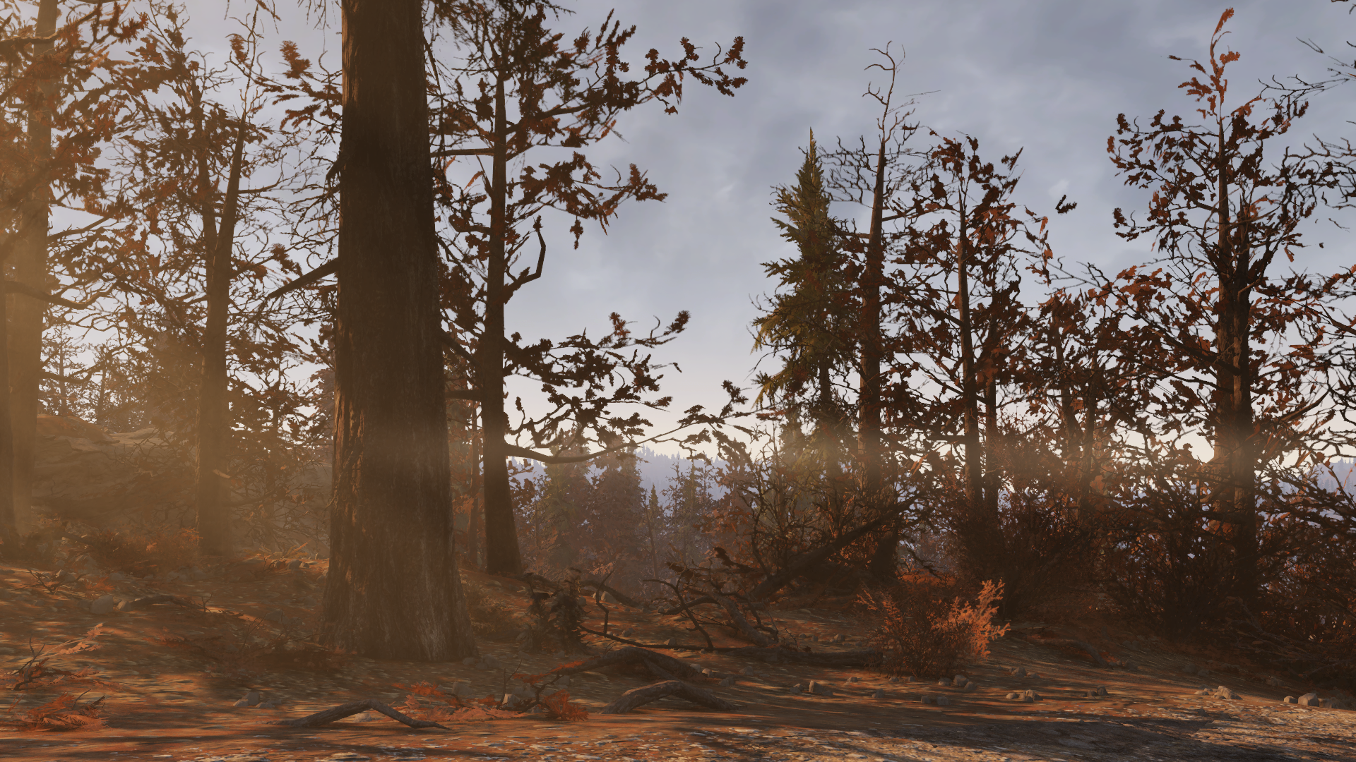 Лес - Fallout 76