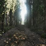 Heat Дорога в лесу