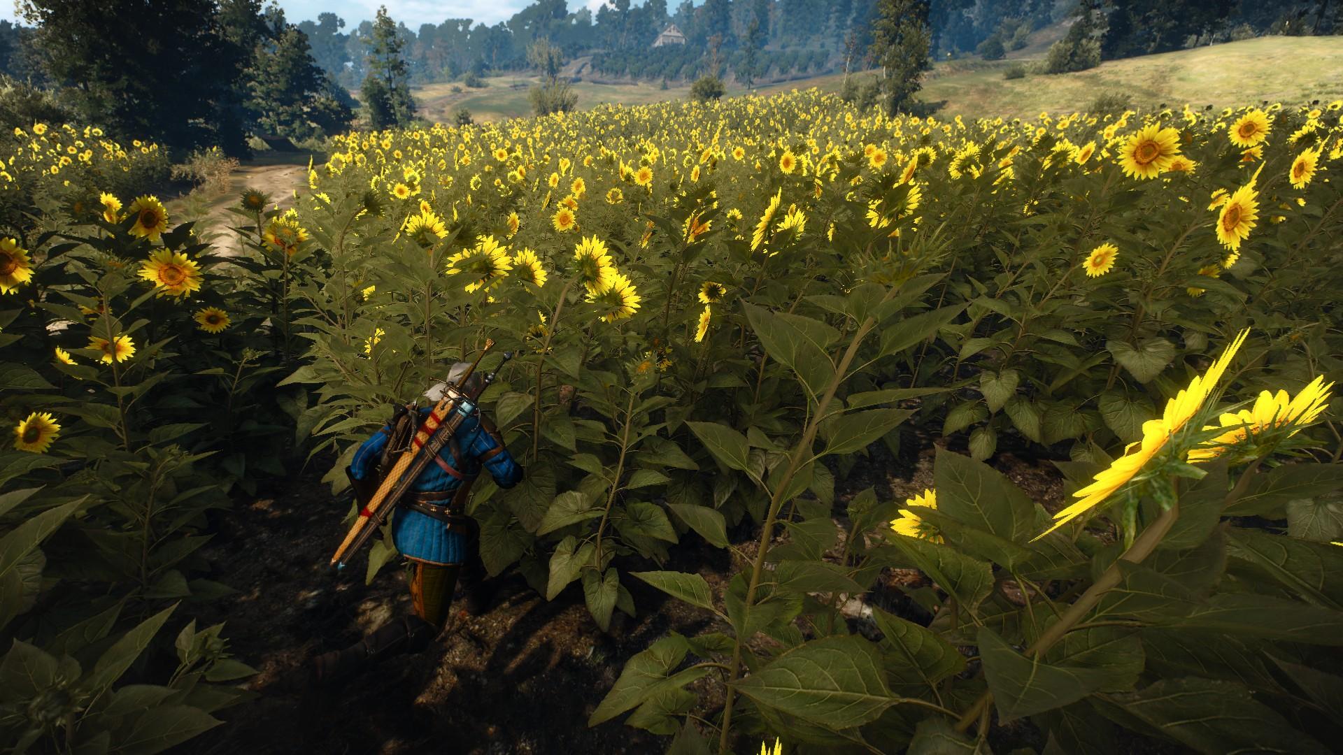 The Witcher 3 Screenshot 2019.02.08 - 01.39.29.18.jpg - Witcher 3: Wild Hunt, the