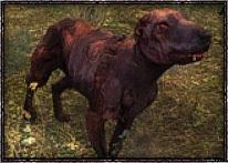 Мутант - - мутант, слепой пёс, собака