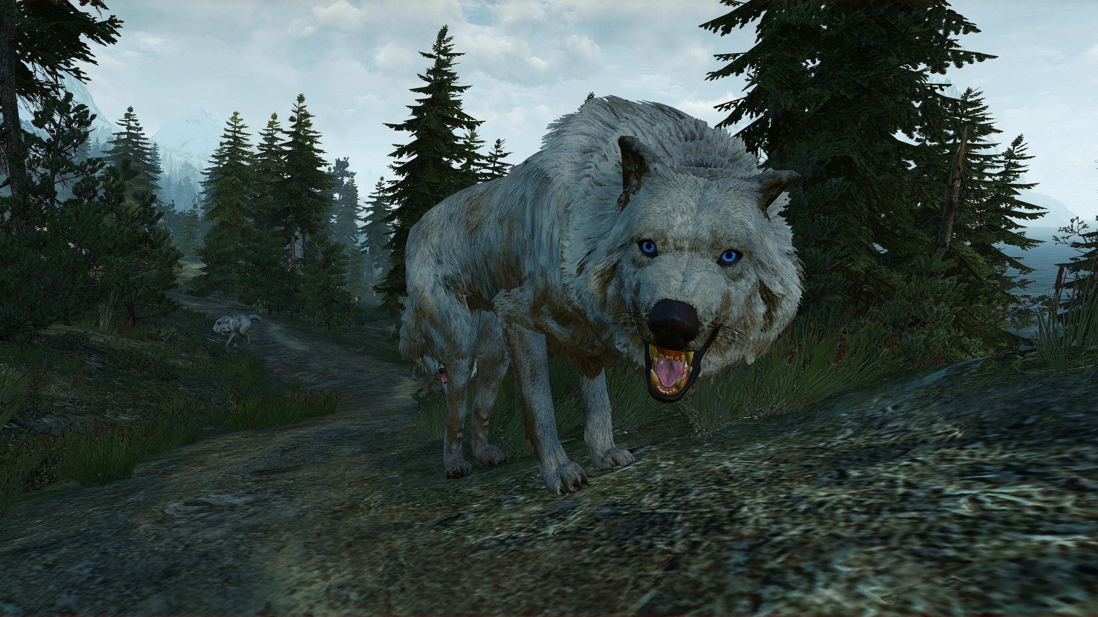 The Witcher 3 Screenshot 2020.07.26 - 12.59.18.jpg - The Witcher 3: Wild Hunt