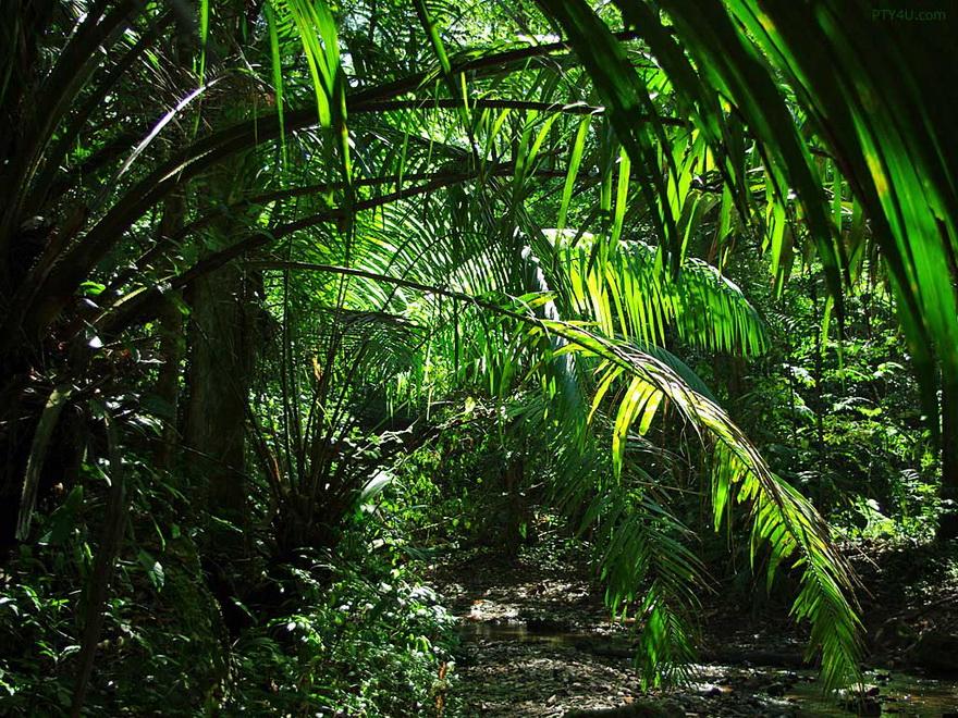 пальмы и лианы картинки