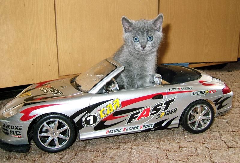 Машинки в картинках кошки