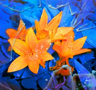 Цветы, рамки  Все для украшения