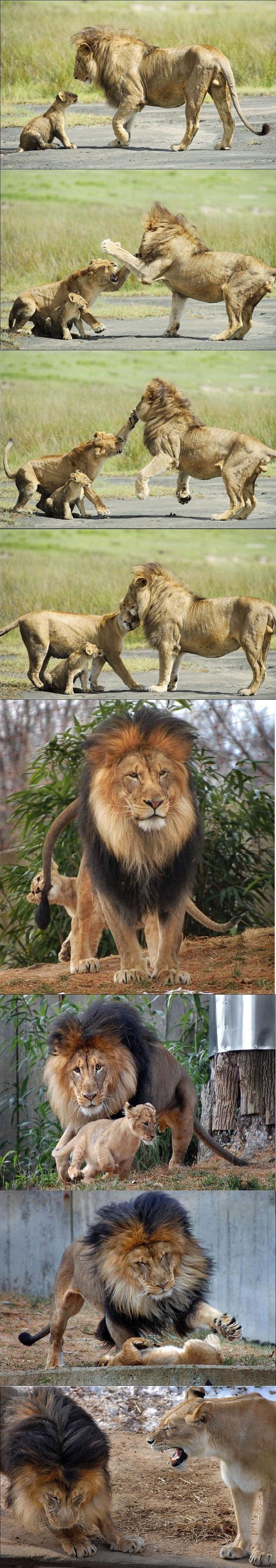 тяжелая доля Львиная - Lionheart