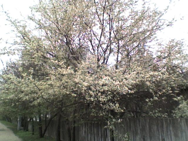 Spring tree - -