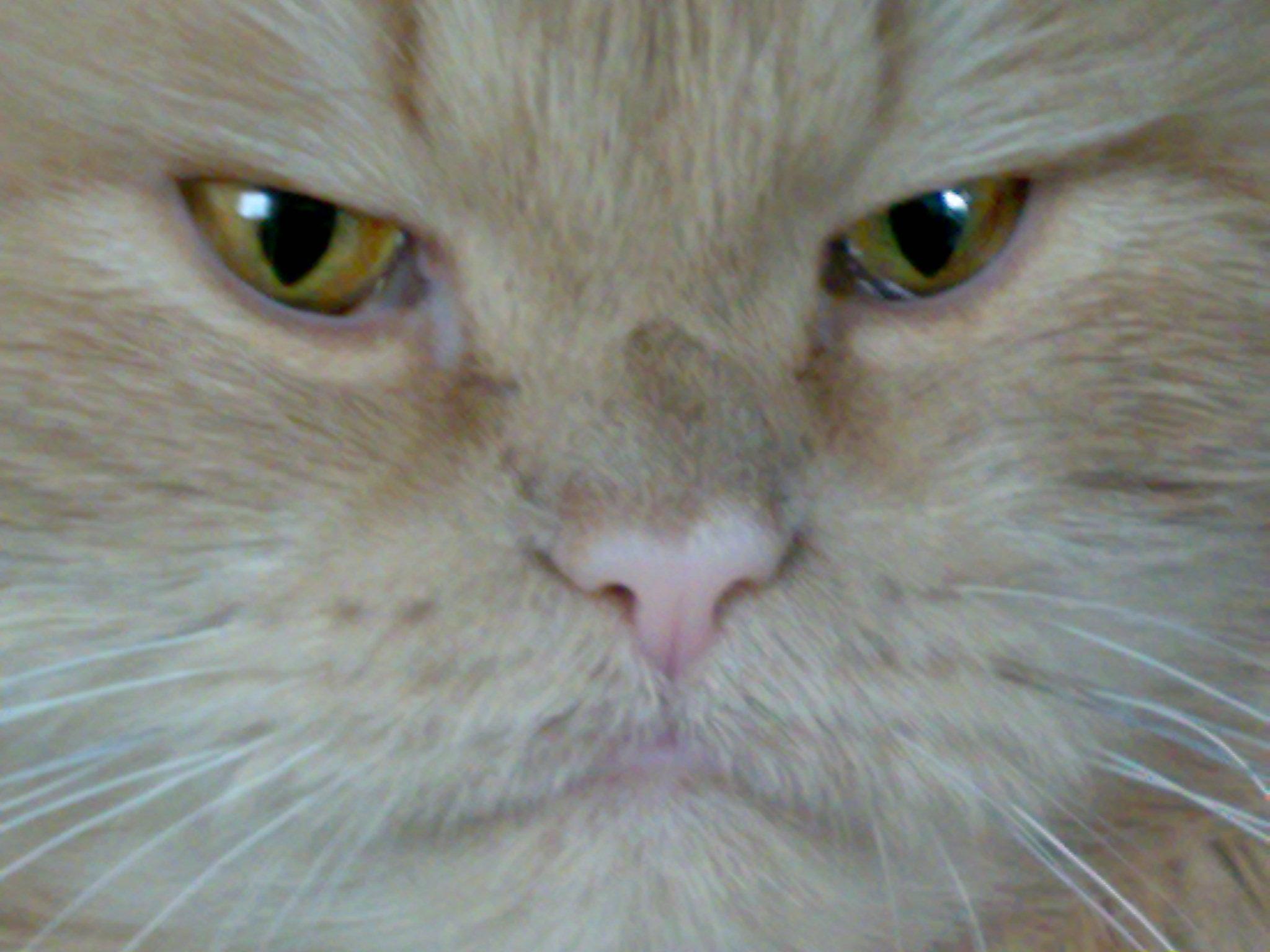 Котик2 - -