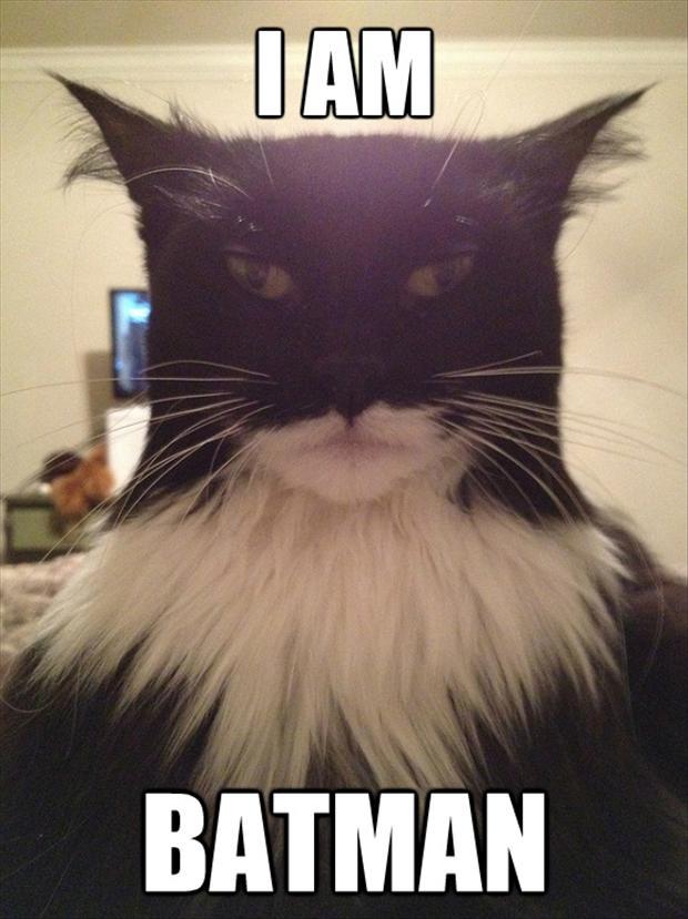 i-am-batman-funny-pictures.jpg - -