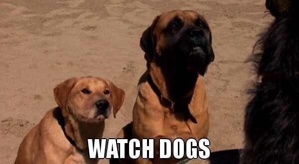 Собаки - -