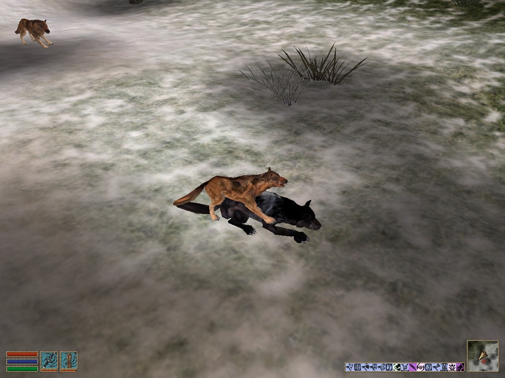Волки спариваются.jpg - -