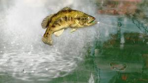 миниатюра скриншота Rapala Pro Bass Fishing