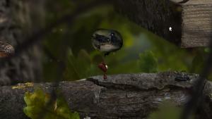 миниатюра скриншота AntVentor