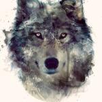 GREY WOLF 19