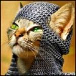 Roayal cat
