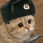 Кот по имени Хлеб